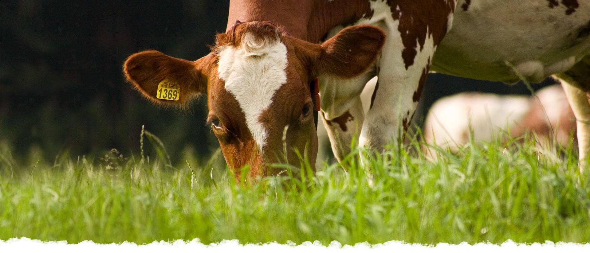 IJsboerderij 'De Steenoven' · Hummelo